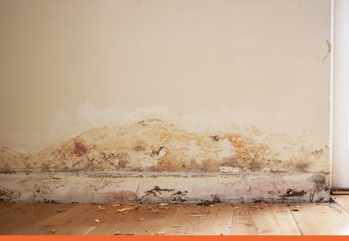 Rising and Penetrating Damp